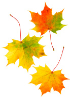 stock-photo-887597-three-pale-autumn-leaves
